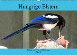 Hungrige Elstern – Faszinierende Vögel auf Futterjagd (Wandkalender 2019 DIN A2 quer) von von Loewis of Menar,  Henning