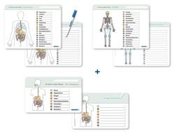 Ich kenne meinen Körper – Organe / Skelett / Verdauung- 3 Tafeln im Set mit Stift von Langhans,  Katrin
