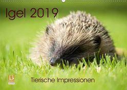 Igel 2019. Tierische Impressionen (Wandkalender 2019 DIN A2 quer)