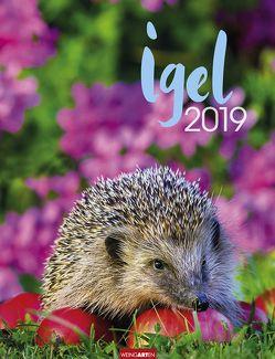 Igel – Kalender 2019 von Weingarten