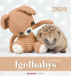 Igelbabys 2020 – Postkartenkalender (16 x 17) – Hedgehogs – zum aufstellen oder aufhängen – Geschenkidee – Tierkalender – Gadget von ALPHA EDITION