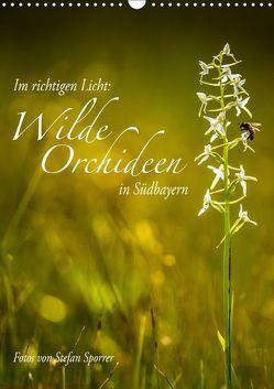 Im richtigen Licht: Wilde Orchideen in Südbayern (Wandkalender 2019 DIN A3 hoch) von Spörrer,  Stefan