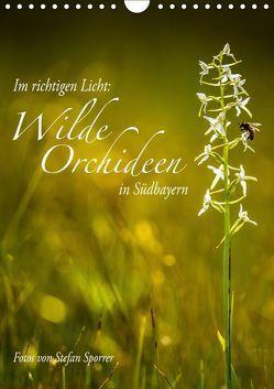 Im richtigen Licht: Wilde Orchideen in Südbayern (Wandkalender 2019 DIN A4 hoch) von Spörrer,  Stefan