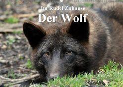 Im Rudel Zuhause – Der Wolf (Wandkalender 2019 DIN A2 quer) von Klatt,  Arno