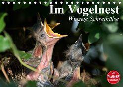Im Vogelnest. Winzige Schreihälse (Tischkalender 2019 DIN A5 quer) von Stanzer,  Elisabeth
