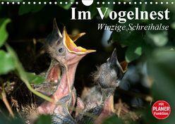 Im Vogelnest. Winzige Schreihälse (Wandkalender 2019 DIN A4 quer) von Stanzer,  Elisabeth