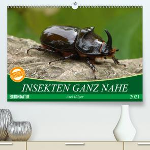 INSEKTEN GANZ NAHE (Premium, hochwertiger DIN A2 Wandkalender 2021, Kunstdruck in Hochglanz) von Hilger,  Axel