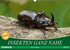 INSEKTEN GANZ NAHE (Wandkalender 2018 DIN A3 quer) von Hilger,  Axel