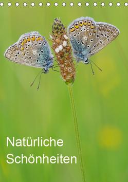 Insekten,Schönheiten der Natur (Tischkalender 2019 DIN A5 hoch) von Blum,  Jürgen