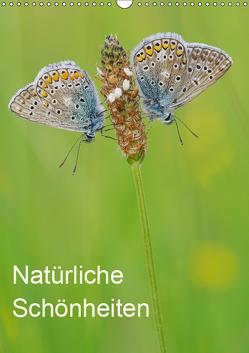 Insekten,Schönheiten der Natur (Wandkalender 2019 DIN A3 hoch) von Blum,  Jürgen