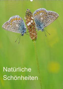 Insekten,Schönheiten der Natur (Wandkalender 2020 DIN A2 hoch) von Blum,  Jürgen
