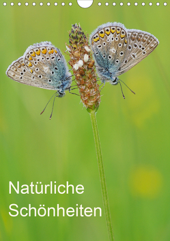 Insekten,Schönheiten der Natur (Wandkalender 2020 DIN A4 hoch) von Blum,  Jürgen
