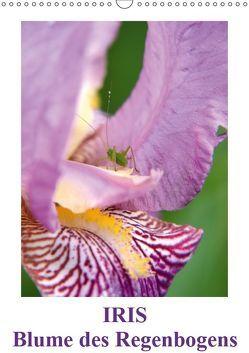 Iris, Blume des Regenbogens (Wandkalender 2019 DIN A3 hoch) von Haas,  Willi