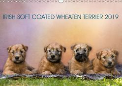 IRISH SOFT COATED WHEATEN TERRIER 2019 (Wandkalender 2019 DIN A3 quer) von Mirsberger www.tierpfoto.de,  Annett