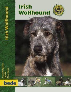 Irish Wolfhound von Kane,  Alice