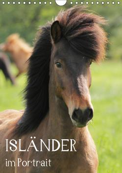Isländer im Portrait (Wandkalender 2019 DIN A4 hoch) von Hollstein,  Alexandra