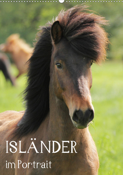 Isländer im Portrait (Wandkalender 2020 DIN A2 hoch) von Hollstein,  Alexandra