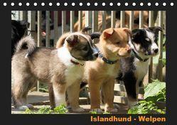 Islandhund – Welpen / CH-Version (Tischkalender 2019 DIN A5 quer) von Angelika Möthrath,  JAMFoto