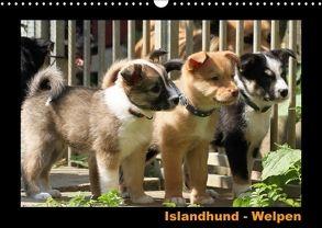 Islandhund – Welpen / CH-Version (Wandkalender 2018 DIN A3 quer) von Angelika Möthrath,  JAMFoto