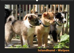 Islandhund – Welpen / CH-Version (Wandkalender 2019 DIN A2 quer) von Angelika Möthrath,  JAMFoto