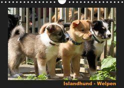 Islandhund – Welpen / CH-Version (Wandkalender 2019 DIN A4 quer) von Angelika Möthrath,  JAMFoto