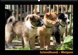 Islandhund – Welpen / CH-Version (Wandkalender 2020 DIN A2 quer) von Angelika Möthrath,  JAMFoto