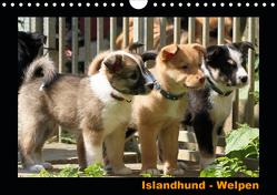 Islandhund – Welpen / CH-Version (Wandkalender 2020 DIN A4 quer) von Angelika Möthrath,  JAMFoto