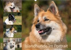 Islandhunde im Portrait (Wandkalender 2019 DIN A2 quer) von Scheurer,  Monika