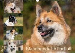 Islandhunde im Portrait (Wandkalender 2019 DIN A3 quer) von Scheurer,  Monika