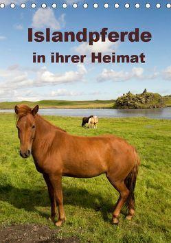 Islandpferde in ihrer Heimat (Tischkalender 2019 DIN A5 hoch) von Rusch,  Winfried