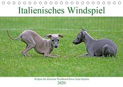 Italienisches Windspiel (Tischkalender 2020 DIN A5 quer) von Eppele,  Klaus