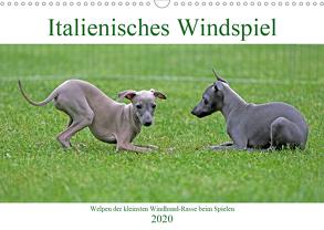 Italienisches Windspiel (Wandkalender 2020 DIN A3 quer) von Eppele,  Klaus