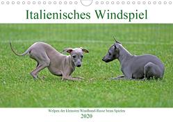Italienisches Windspiel (Wandkalender 2020 DIN A4 quer) von Eppele,  Klaus
