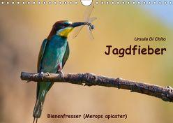 Jagdfieber – Bienenfresser (Merops apiaster) (Wandkalender 2018 DIN A4 quer) von Di Chito,  Ursula