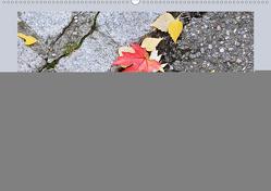 Jahreszeiten in Nahaufnahme (Wandkalender 2019 DIN A2 quer) von schlipho