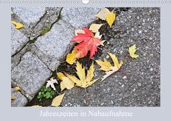Jahreszeiten in Nahaufnahme (Wandkalender 2019 DIN A3 quer) von schlipho