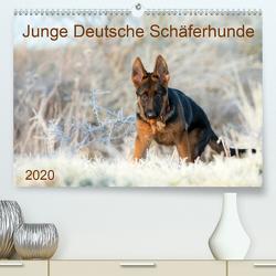 Junge Deutsche Schäferhunde (Premium, hochwertiger DIN A2 Wandkalender 2020, Kunstdruck in Hochglanz) von Schiller,  Petra