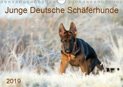 Junge Deutsche Schäferhunde (Wandkalender 2019 DIN A4 quer) von Schiller,  Petra