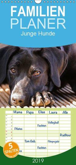 Junge Hunde / 2019 – Familienplaner hoch (Wandkalender 2019 , 21 cm x 45 cm, hoch) von Jaeger,  Carsten