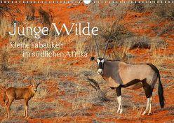 Junge Wilde – Kleine Rabauken im südlichen AfrikaCH-Version (Wandkalender 2019 DIN A3 quer) von Schneeberger,  Daniel