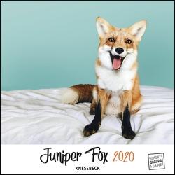 Juniper Fox 2020 – Ein Fuchs zum Verlieben – Tierkalender mit dem berühmtesten Fuchs im Internet – Quadratformat 24 x 24 cm von Coker,  Jessica, DUMONT Kalenderverlag
