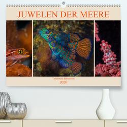 Juwelen der Meere (Premium, hochwertiger DIN A2 Wandkalender 2020, Kunstdruck in Hochglanz) von Gödecke,  Dieter