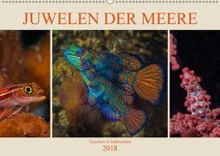 Juwelen der Meere (Wandkalender 2018 DIN A2 quer) von Gödecke,  Dieter