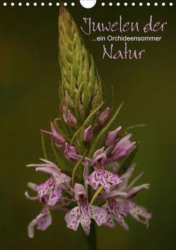 Juwelen der Natur – Ein Orchideensommer (Wandkalender 2020 DIN A4 hoch) von Stamm,  Dirk