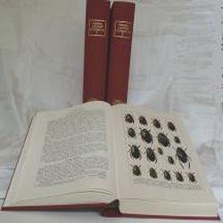Käferbuch von Calwer,  C G, Schaufuss,  Camillo