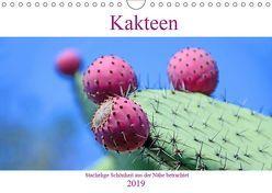 Kakteen – Stachelige Schönheit aus der Nähe betrachtet (Wandkalender 2019 DIN A4 quer) von Schwarze,  Nina
