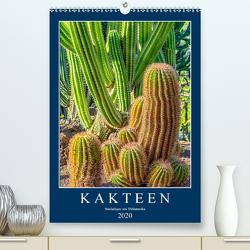 Kakteen – Stacheliges aus Südamerika (Premium, hochwertiger DIN A2 Wandkalender 2020, Kunstdruck in Hochglanz) von Meyer,  Dieter