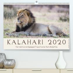 Kalahari – Tierreichtum im Kgalagadi Transfrontier Park, Südafrika (Premium, hochwertiger DIN A2 Wandkalender 2020, Kunstdruck in Hochglanz) von Trüssel,  Silvia