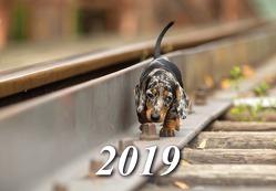 Kalender 2019 von Canimos,  Verlag
