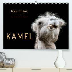 Kamel Gesichter (Premium, hochwertiger DIN A2 Wandkalender 2020, Kunstdruck in Hochglanz) von Roder,  Peter